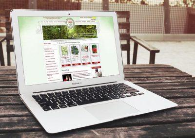 First Light Web Design